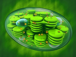 Chloroplast, plant cell organelle. 3d image. Green background
