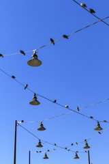 Pigeons sitting on power lines at Pier 84 in Manhattan, New York City, New York, USA