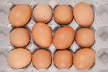 Close-up view of raw chicken eggs in egg box