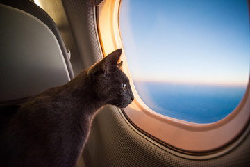 Travelling cat