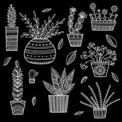 house plants set