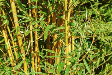 Fotobehang Bamboo Bamboo trees