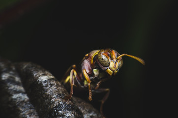 hornest on nest in the dark.
