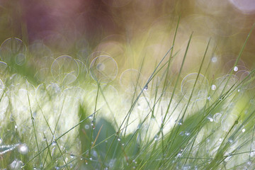 Spring grass blurred background bokeh