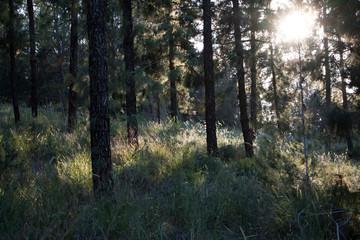 Backlight Forest