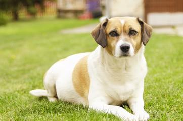 thrilled dog outdoor