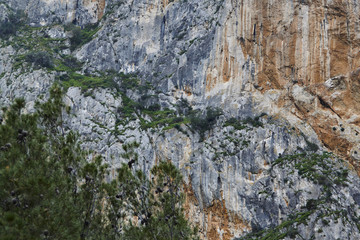 Wall Mural - Desfiladero de los Gaitanes, overgrown moutain and tree in front