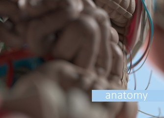 Anatomy body model extreme close-up. Selective focus. Human anatomy body. 3d illustration.