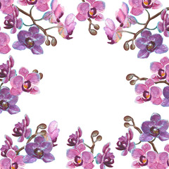 Watercolor orchid branches on white background
