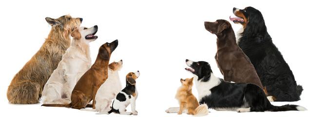 Hunde sehen nach oben