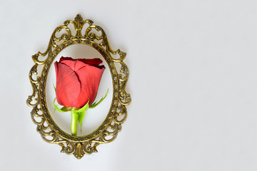 Mothers Day card: Red rose in the vintage frame on light background