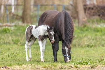 Bilder Und Videos Suchen Pferdegeburt