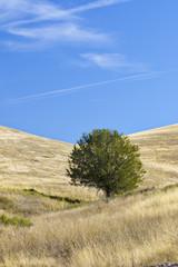 Lone tree on rolling grasslands of National Bison Range