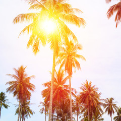 Sun Through Palm Trees Jungle Landscape Tropical