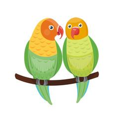Cartoon tropical lovebird parrot wild animal bird vector illustration wildlife zoo couple nature vivid.