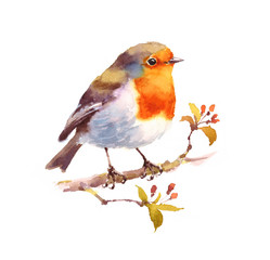 Watercolor Bird Robin on the Branch Hand Drawn Illustration isolated on white background