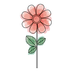 watercolor drawing of daysi flower with leaves and stem vector illustration