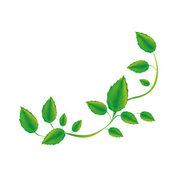 white background with green creeper vector illustration