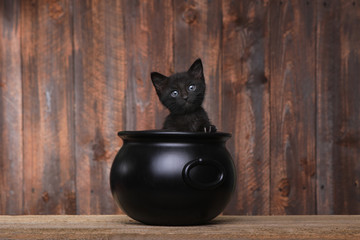 Adorable Kitten in Halloween Cauldron on Wood Background