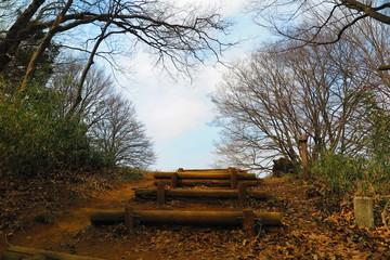 山の森の公園の風景15