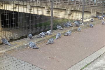 鳥と遊歩道の風景5