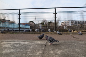 鳥と遊歩道の風景4