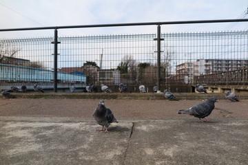 鳥と遊歩道の風景3