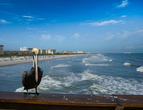 Pelican on Cocoa Beach Pier