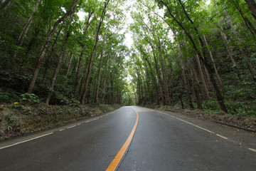 Scene with road in forest at Bilar Man-Made Forest,Philippine