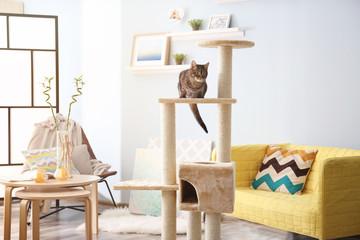 Cute cat sitting on tree in modern room