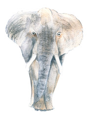 elephant. African animal, watercolor.