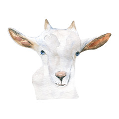 goat. animal, watercolor.