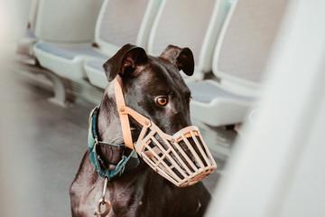 Dog wearing muzzle at subway Wall mural