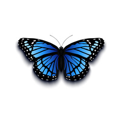 Realistic butterfly icon isolated on white background.