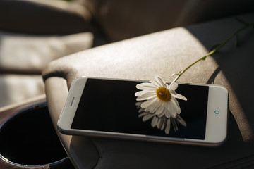 Smartphone in car with chamomile at sunset