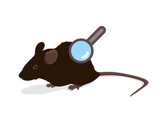 Rat vector illustration