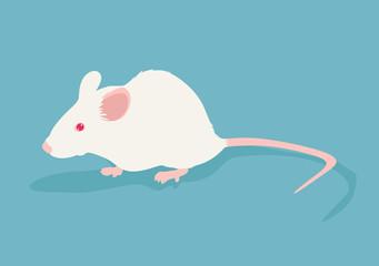 Lab white rat vector illustration