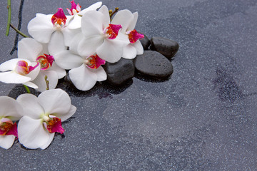 Spa stones and white orchid on grey background.