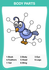 Illustration of nightingale  vocabulary part of body,Write the correct numbers of body parts