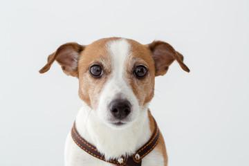 Adorable dog looking at camera