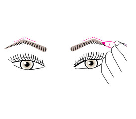 Woman drawing the eyebrows shape. Vector illustration