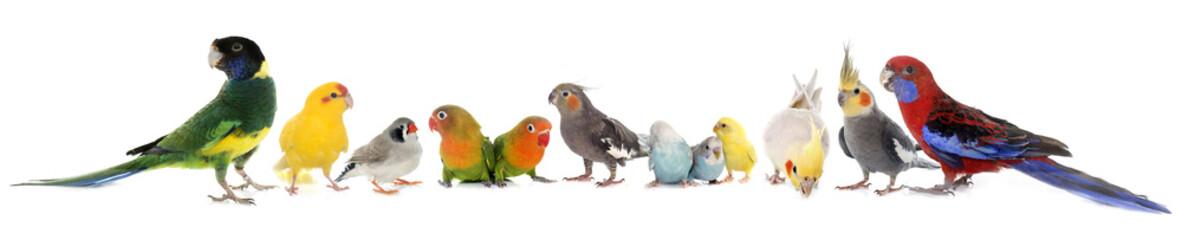 Photo sur Plexiglas Oiseau group of birds