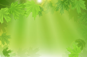 Forest fresh green leaves with sun rays. Spring and Summer Background