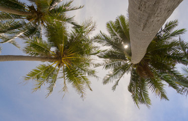 Palm trees and sky bottom view