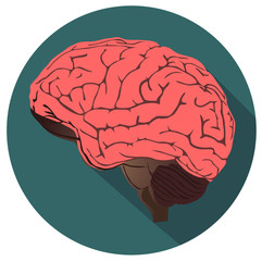 Brain vector illustration eps 10