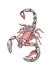 vector Scorpion tattoo