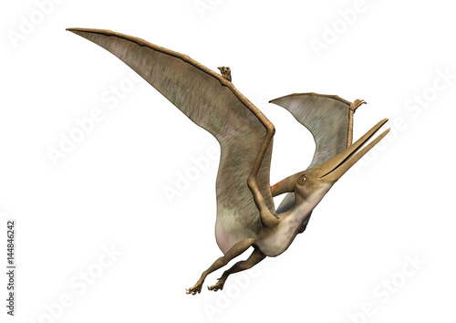 3D Rendering Pteranodon on White