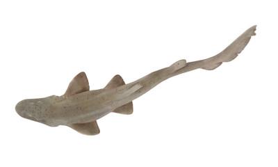 Shark fish isolated on white background