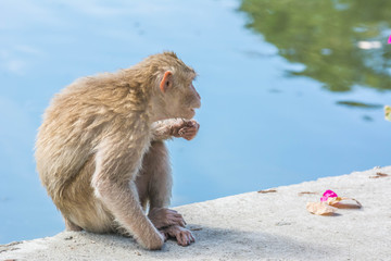 Monkey close-up