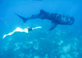 Woman snorkeling with while shark
